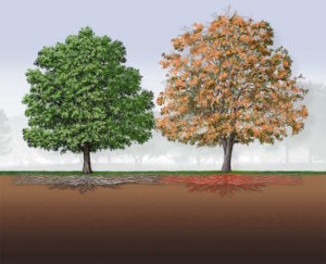 Oak Wilt – Protect Our Oaks